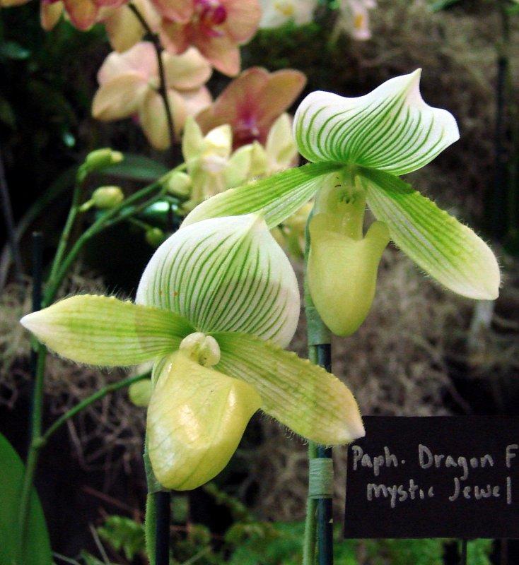 Orchids2 043.jpg