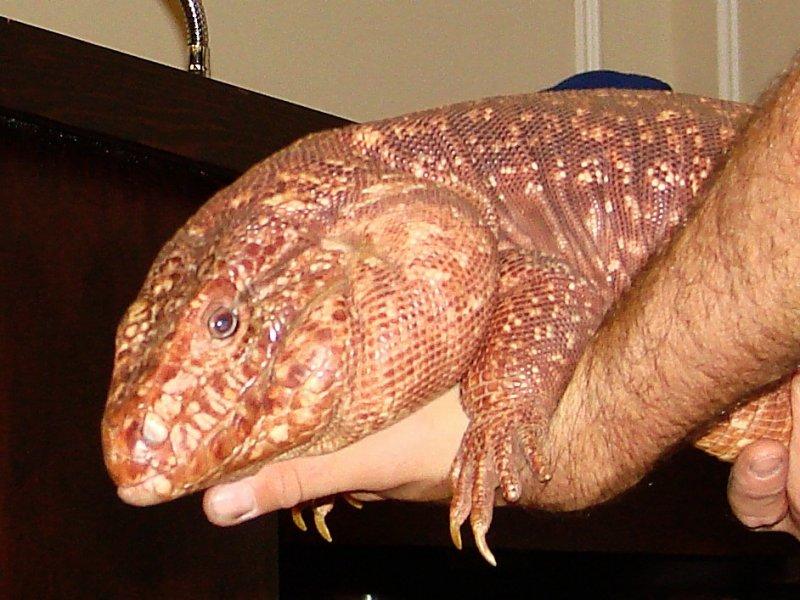 Reptiles 010.jpg