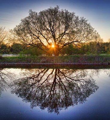 Tree At Sunrise 20110510