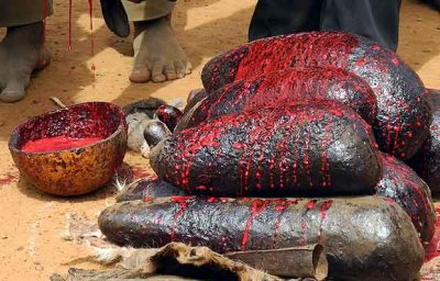 Blood of the sacrificed animals. Later the blood is rubbed all over the fetishes.