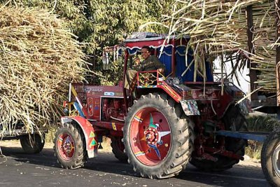 Tractor taking sugar cane to the factory