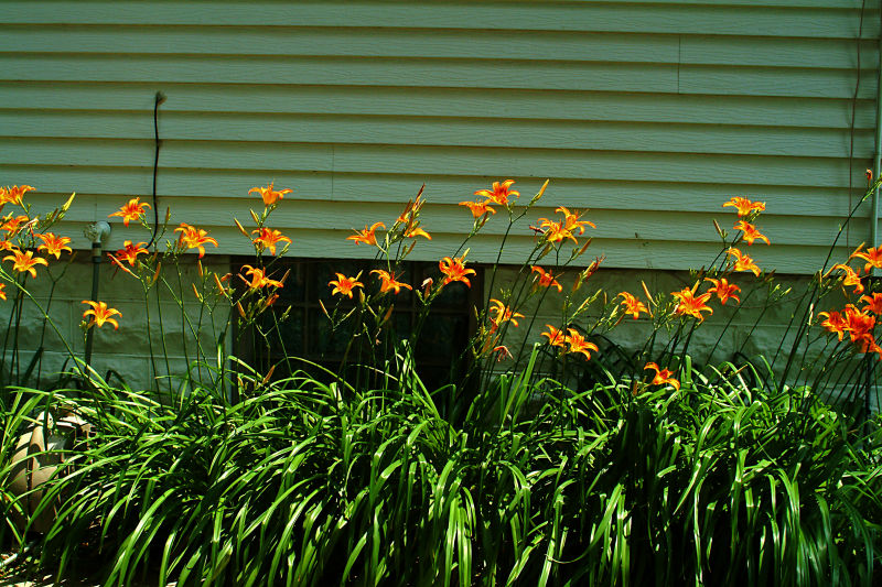 Flowers at the Back of Our Le Mars Home