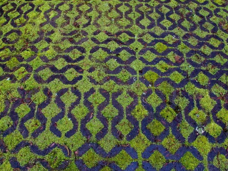 moss and concrete