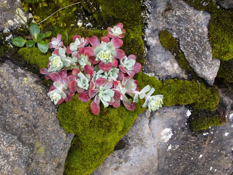 succulants, rock and moss