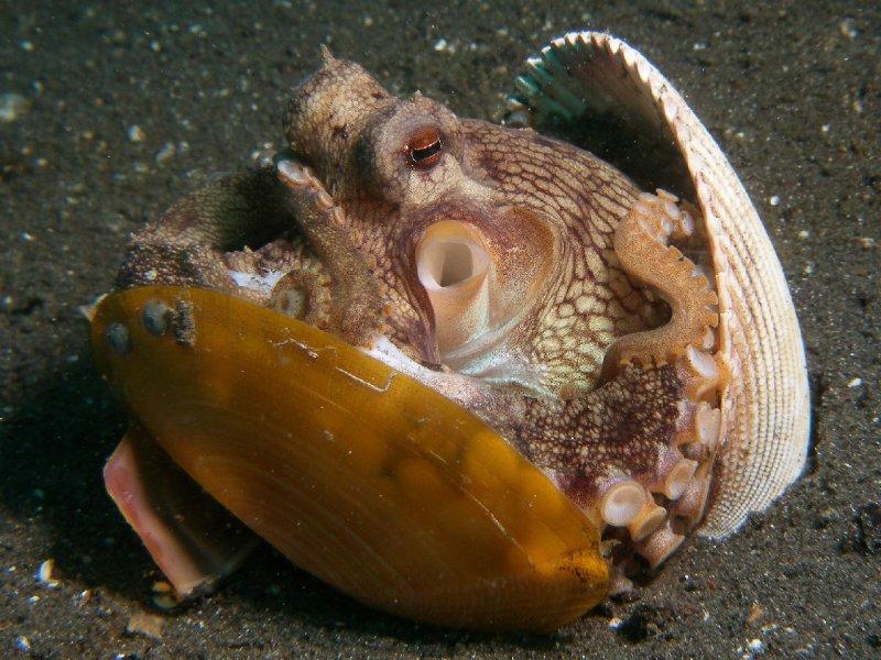 Kokosnoot-octopus5.JPG