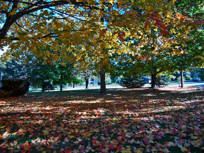 Battle Creek Fall Lawn