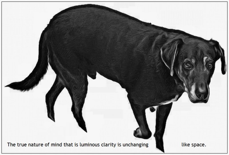 Uttaratantrashastra Dog