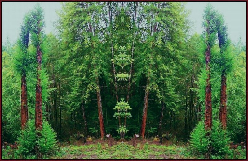 Redwood Re-Growth