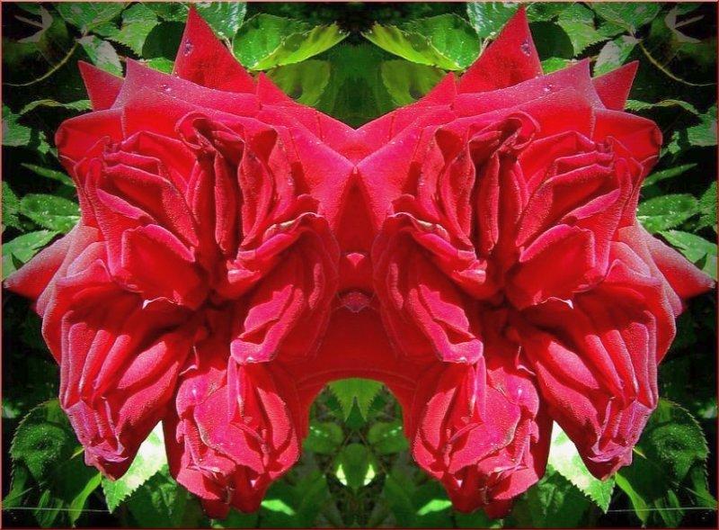 Rose Sharpei Mask