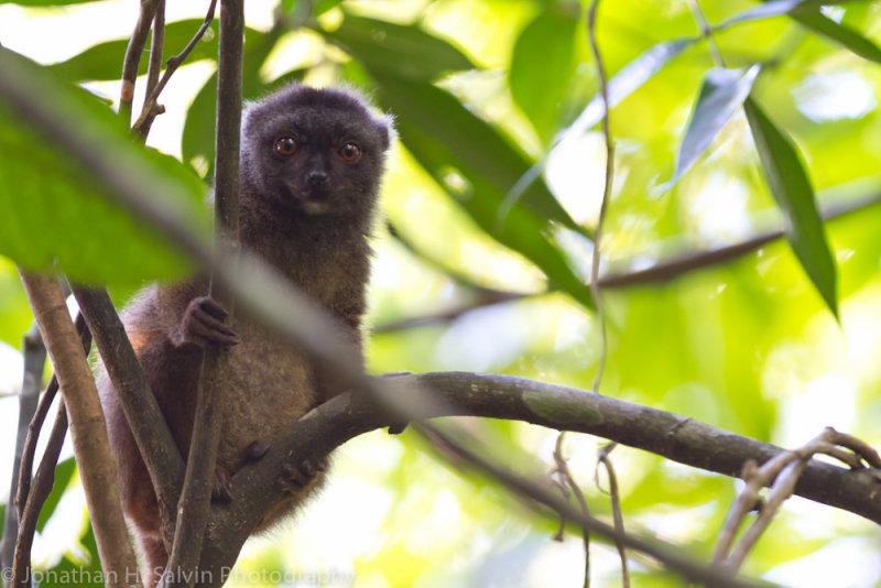 Madagascar-1428.jpg