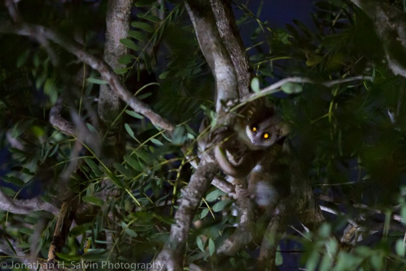 Madagascar-1895.jpg