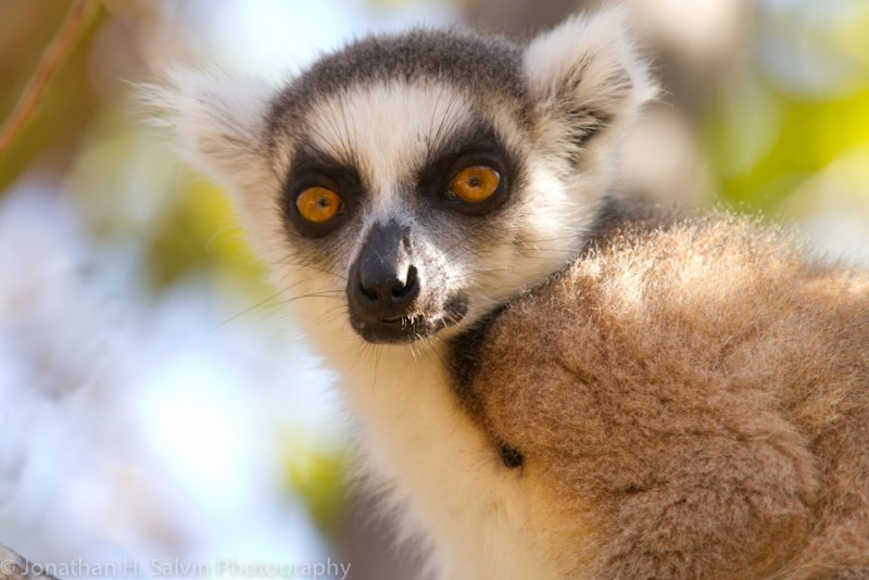 Madagascar-2287-Edit.jpg