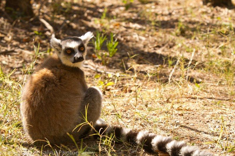 Madagascar-2328.jpg