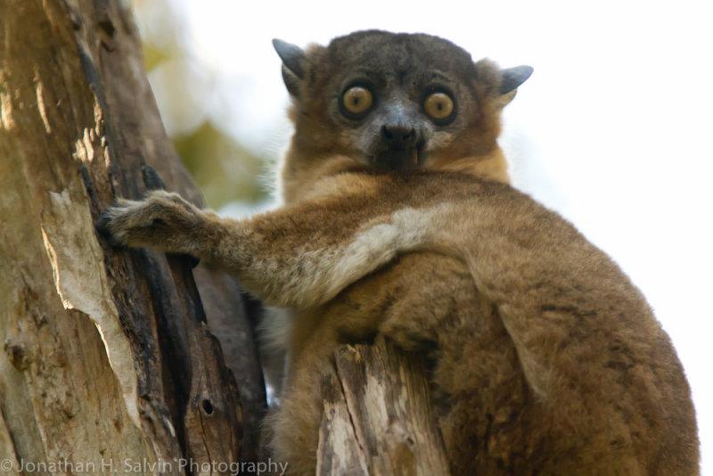Madagascar-2576.jpg