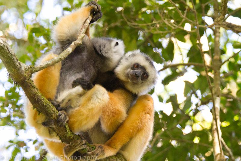 Madagascar-269.jpg