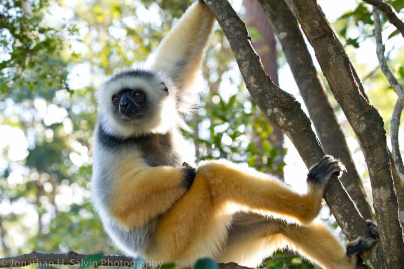 Madagascar-342.jpg