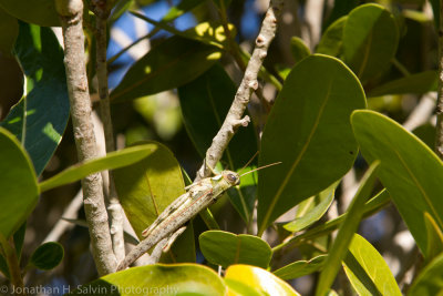 Madagascar-2092.jpg