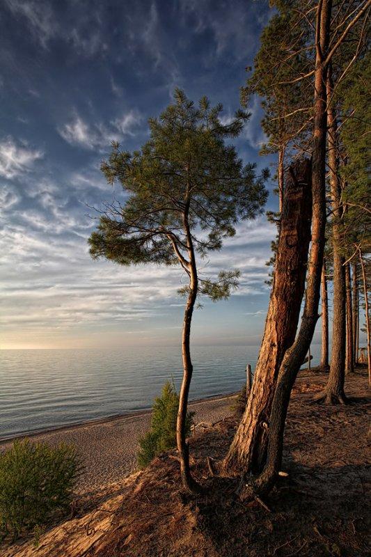 Sunset Pine - Lake Superior - Upper Michigan
