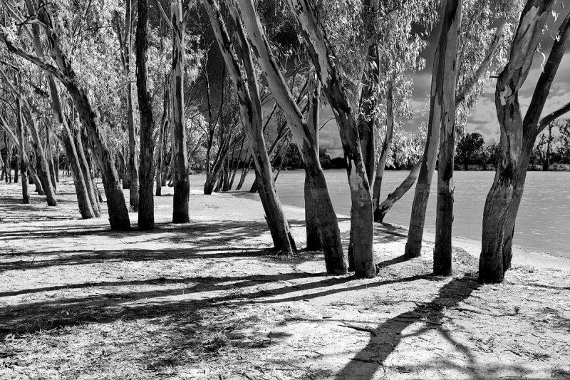 Banks of the River Murray