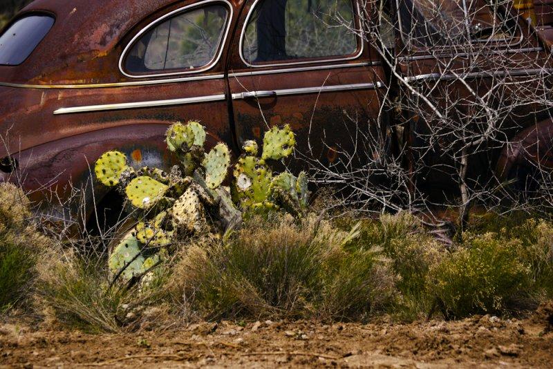 Cactus bound, Cordes Junction, Arizona, 2011