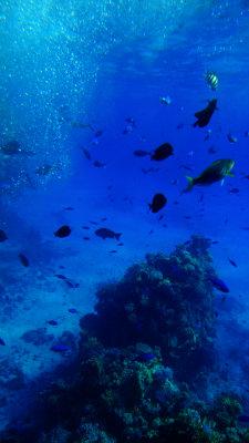 Under the Red Sea, off Sharm el-Sheikh, Egypt, 2011