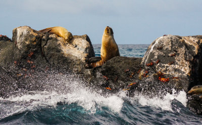 Rocks, spray, sea lions, and crabs off Santa Fe Island, The Galapagos, Ecuador, 2012