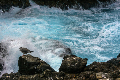 Water's edge: South Plaza Island, The Galapagos, Ecuador, 2012