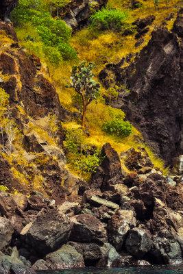 Landscape, Espumilla Beach, Santiago Island, The Galapagos, Ecuador, 2012