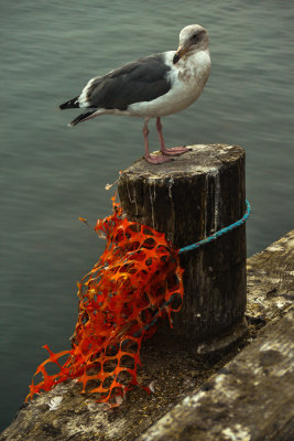 Shredded safety fence, Fisherman's Wharf, Monterey, California, 2012