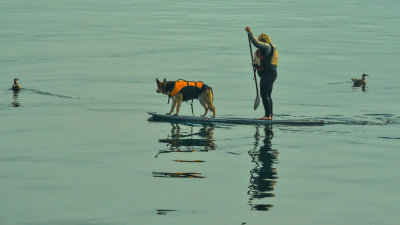 Floating the dog, Monterey, California, 2012