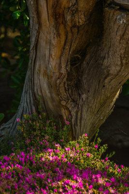 Glowing garden, Carmel, California, 2012
