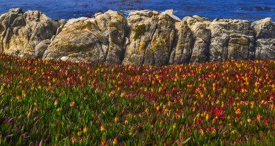 Wildflowers, Carmel, California, 2012