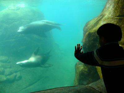 Sea lion pool, Aquarium, Newport, Oregon, 2006