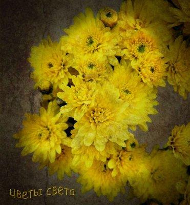 Flowers of light...