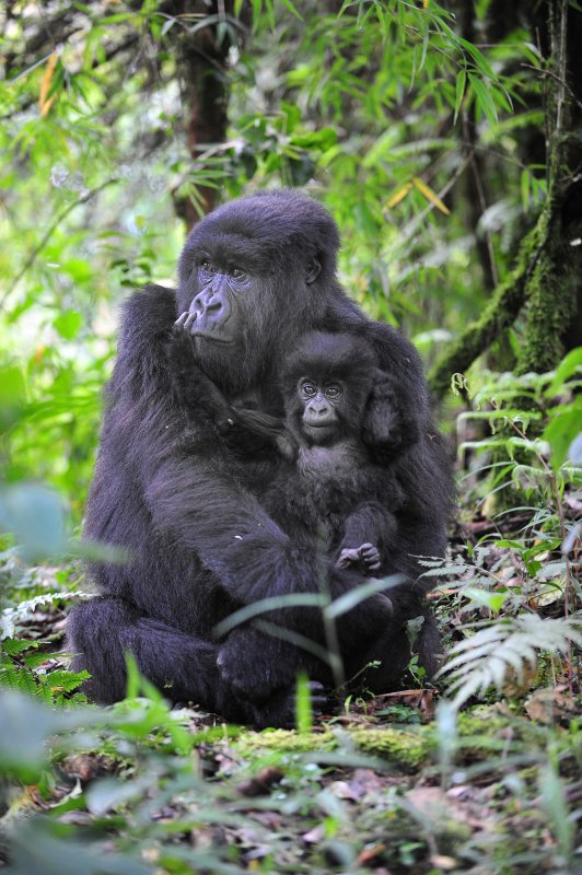Hirwa Mom and Infant 2011