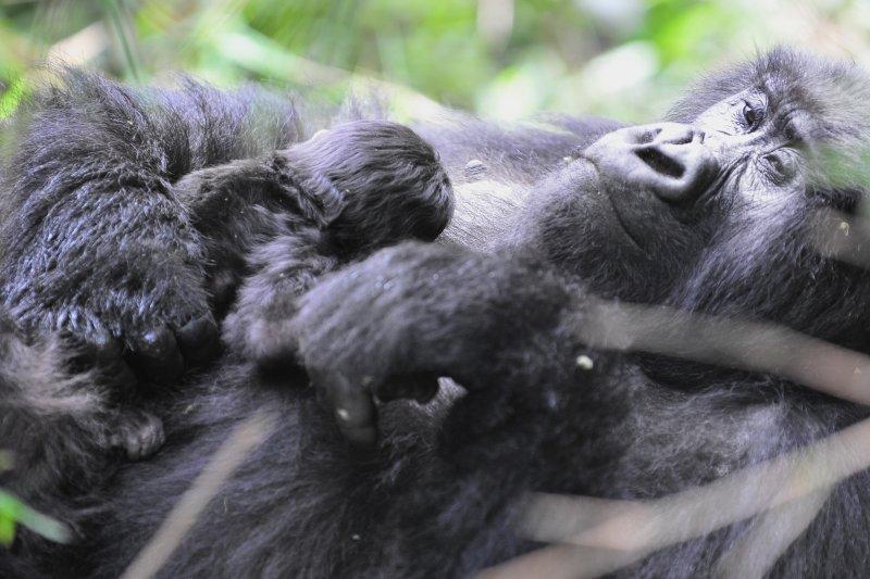 Hirwa Mom and 1 Week Old 2011