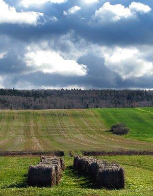 les champs et le ciel