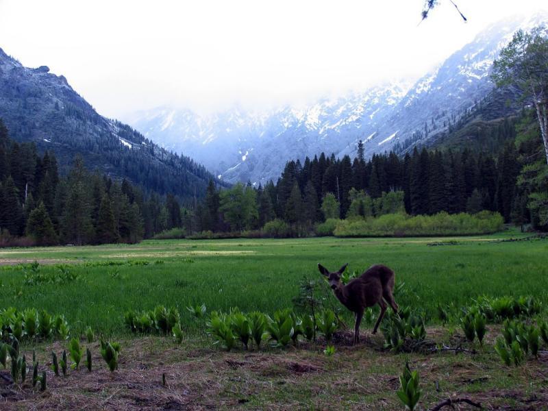 Morris Meadows deer
