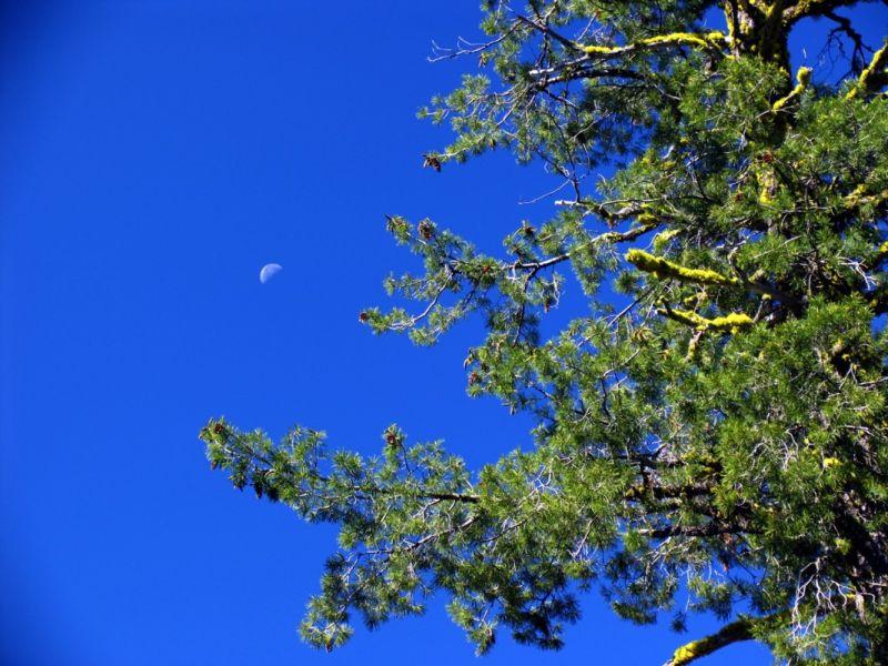 Moon, sky, tree