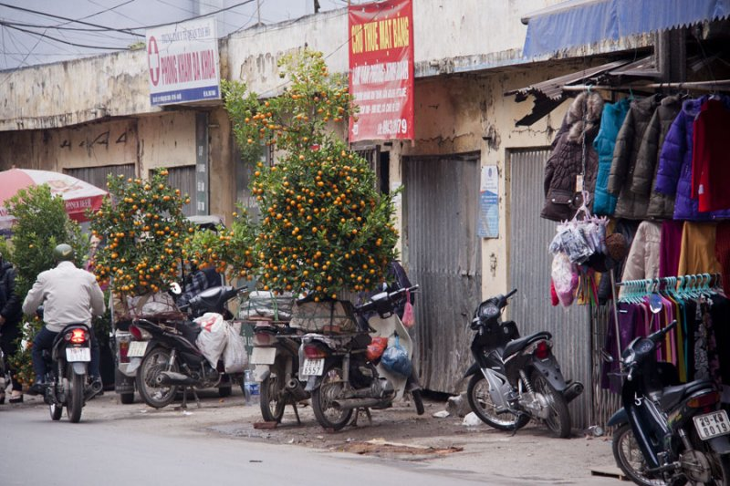 Tet in Hanoi 2012