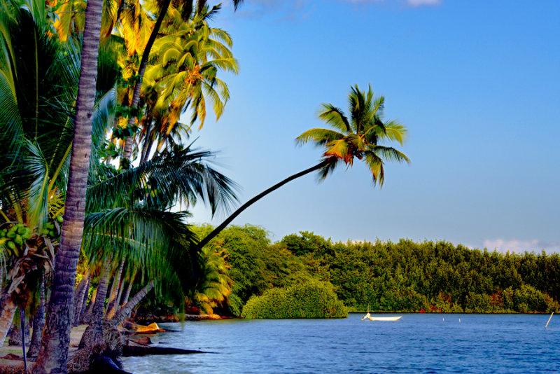 Kapuaiwa coconut grove - Kapuaiwa
