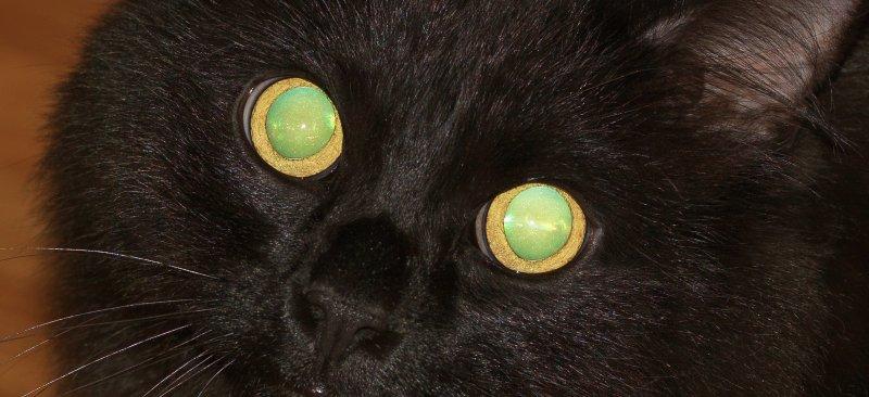 MAINE COON CAT_0183.jpg