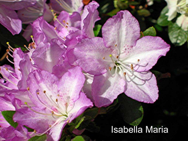 Isabella Maria