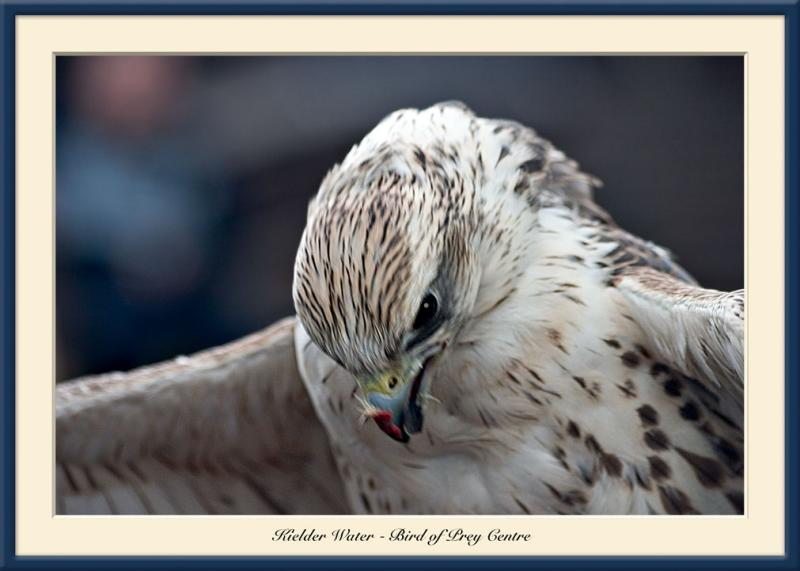Bird of Prey Centre 5
