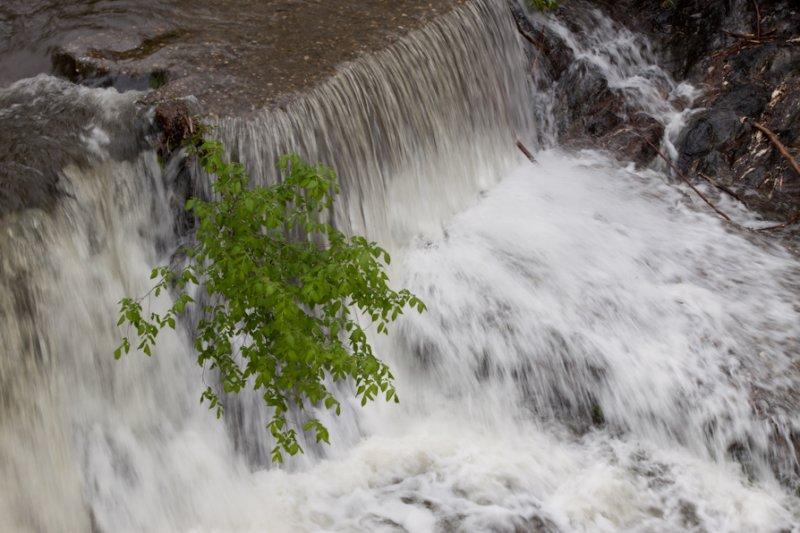 Whetstone Brook 4