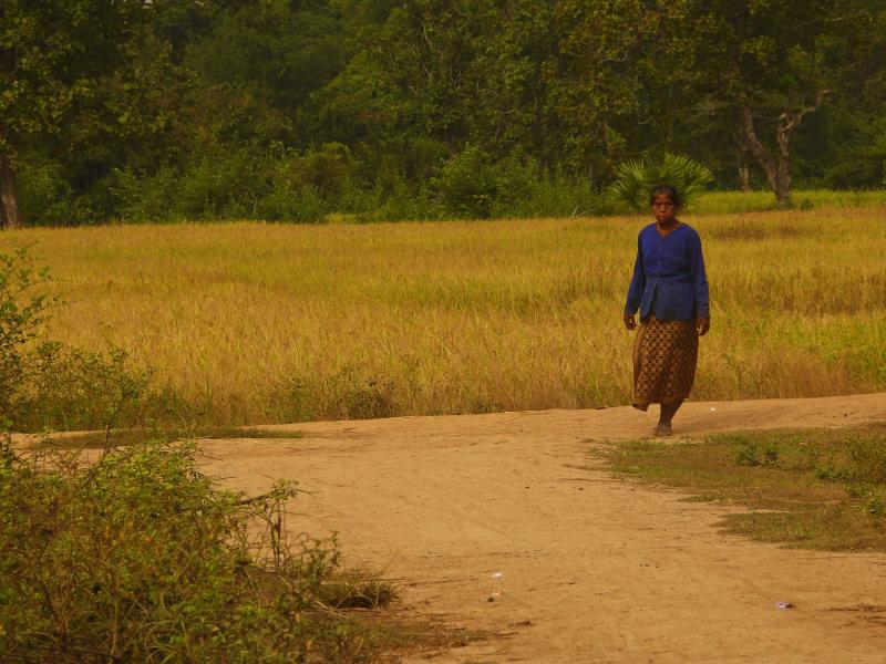 Woman in the fields.jpg