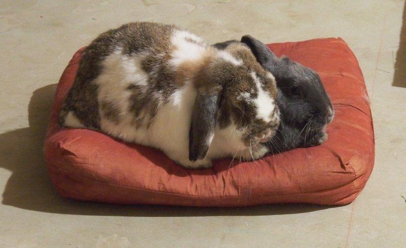 Lounging Bunnies
