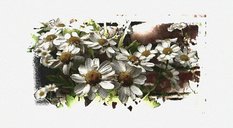 CHAMOMILE PLANT AGAINST THE BRICKS