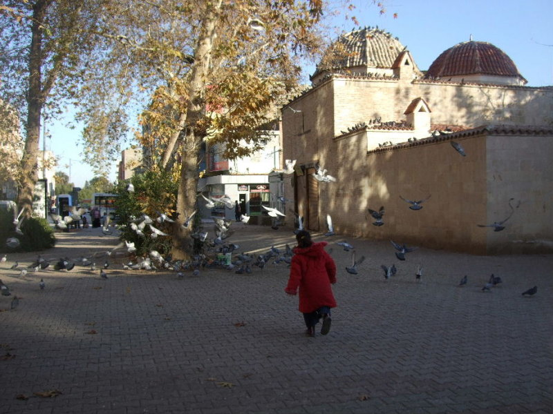 Chasing pigeons across the street from the Ulu Cami, Adana.