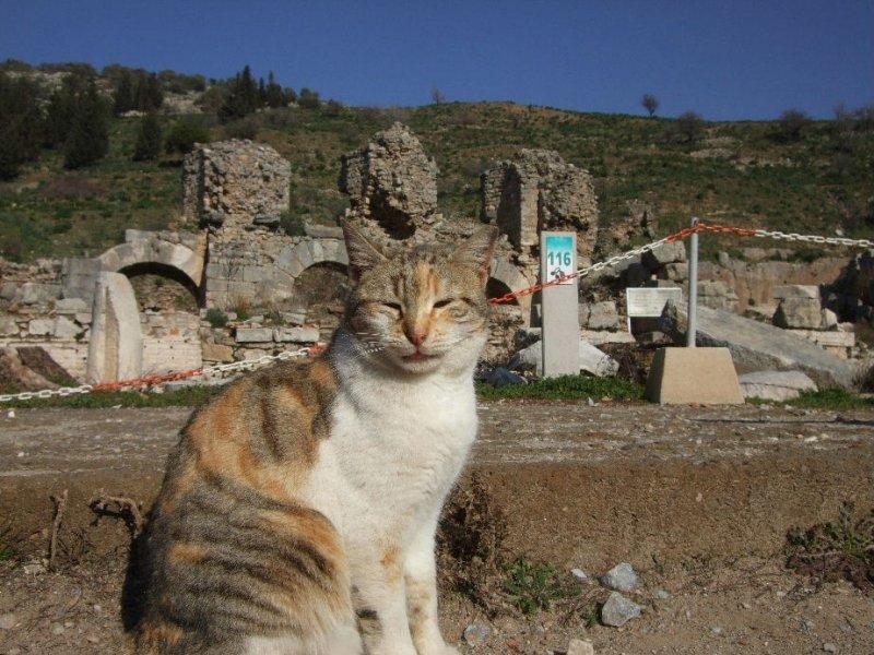 Ephesus bath cat